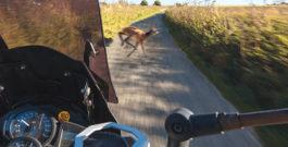 Erhöhtes Risiko im Herbst – Vorsicht Wildwechsel!